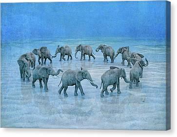 Elephants Canvas Print - The Circle  by Betsy Knapp