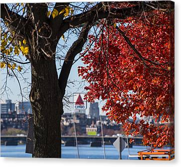 The Citgo Sign Through The Trees Boston Ma Charles River Canvas Print by Toby McGuire