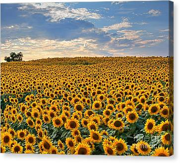Farm Stand Canvas Print - The Colby Farm by Steve Brown