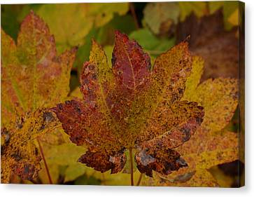 The Color Of Autumn Canvas Print by Jeff Swan
