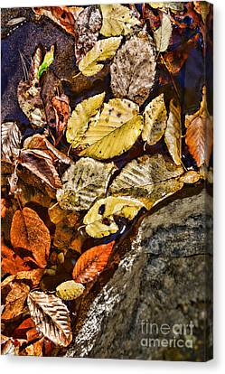 Autumn Leaf On Water Canvas Print - The Color Of Fall by Paul Ward