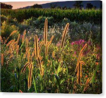 Canvas Print featuring the photograph The Color Of Summer 2017 by Bill Wakeley