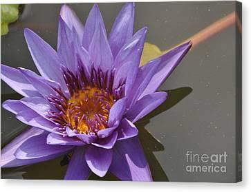 The Color Purple Canvas Print