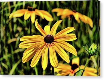 Canvas Print featuring the photograph The Colors And Details by Monte Stevens
