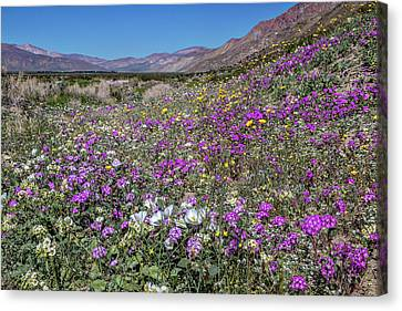 Canvas Print featuring the photograph The Colors Of Spring Super Bloom 2017 by Peter Tellone