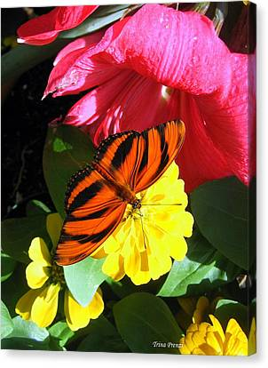 The Colors Of Summer Canvas Print by Trina Prenzi