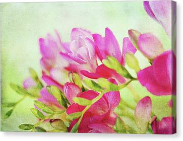 Canvas Print featuring the photograph Colour Full Freesia by Connie Handscomb