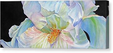 The-colours-of-white Canvas Print by Nancy Newman