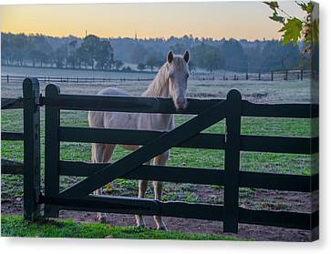 The Colt - Whitemarsh Pa Canvas Print