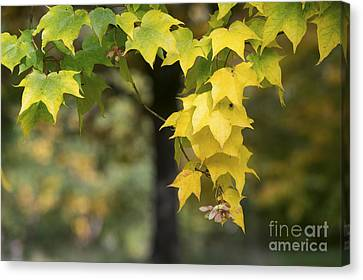 The Coming Of Autumn Canvas Print by Tim Gainey