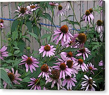 The Coneflowers Canvas Print