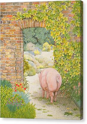 The Convent Garden Pig Canvas Print by Ditz