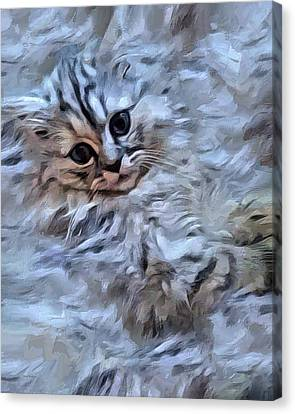 The Cotton Kitty  Canvas Print by Scott Wallace