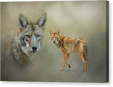 The Coyotes Of Shiloh Canvas Print