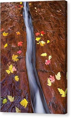 Canvas Print featuring the photograph The Crack by Patricia Davidson