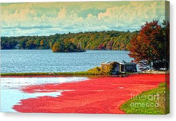 The Cranberry Farm On Cape Cod Canvas Print