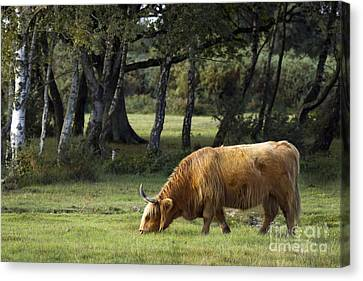 The Creature Of New Forest Canvas Print