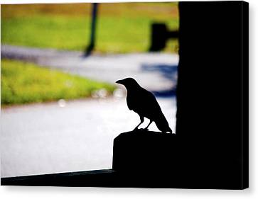 Canvas Print featuring the photograph The Crow Awaits by Karol Livote