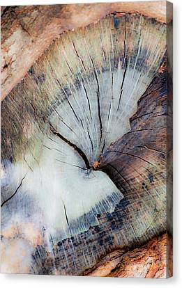 The Cut Canvas Print by Stephen Anderson