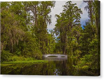 Canvas Print featuring the photograph The Cypress Garden by Steven Ainsworth