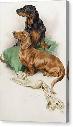 The Dachshunds Canvas Print by Arthur Wardle