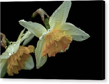 The Daffodil Canvas Print