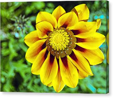 Canvas Print featuring the photograph The Daisy by Matthew Bamberg