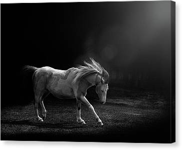 Canvas Print featuring the photograph The Dance by Debby Herold