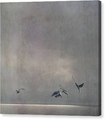 Canvas Print featuring the photograph The Dance by Sally Banfill