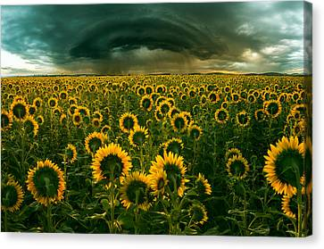 The Dark Crown Canvas Print by Adrian Borda