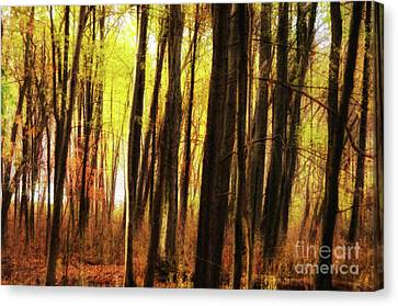 The Dark Forest Mood Canvas Print