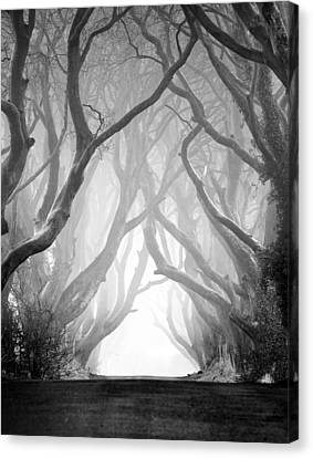 The Dark Hedges Iv Canvas Print by Pawel Klarecki