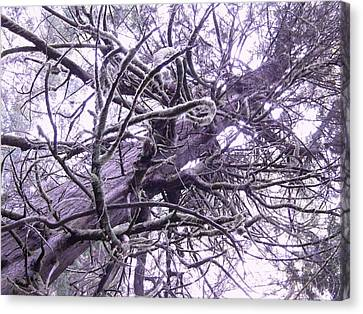 The Deception Tree Canvas Print by Angi Parks