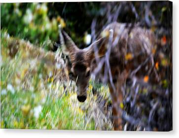 The Deer Canvas Print by Nature Macabre Photography