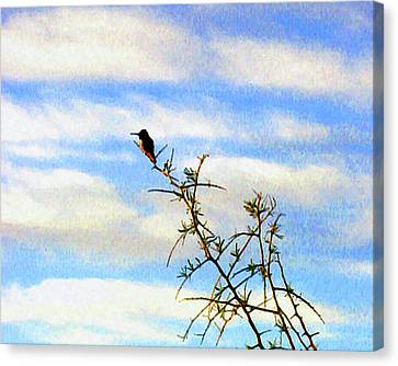 Canvas Print featuring the digital art The Desert Hummingbird by Timothy Bulone