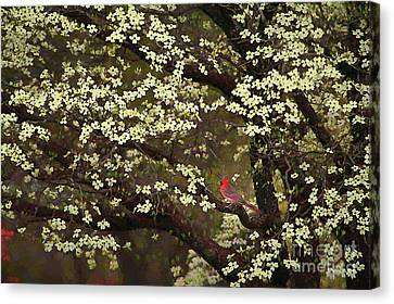 The Dogwoods And The Cardinal Canvas Print