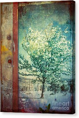 The Door And The Tree Canvas Print by Tara Turner