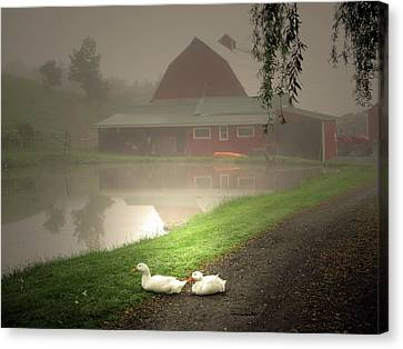 Canvas Print - The Ducks In The Morning Fog At Maple Hill Farm by Patricia Keller