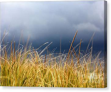 Canvas Print featuring the photograph The Tall Grass Waves In The Wind by Dana DiPasquale