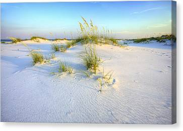 The Dunes Of Shell Island Canvas Print by JC Findley