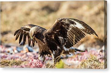 The Eagle Have Come Down Canvas Print by Torbjorn Swenelius