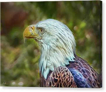Canvas Print featuring the photograph The Eagle Look by Hanny Heim