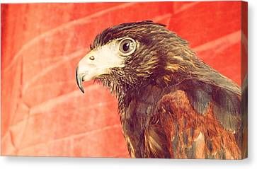 The Eagle Canvas Print by Pedro Venancio