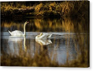 The Elegance Of Nature Canvas Print by TL Mair