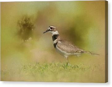 The Elusive Killdeer Canvas Print by Jai Johnson
