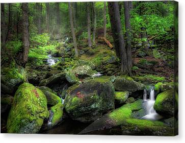 The Enchanted Forest Canvas Print by Bill Wakeley