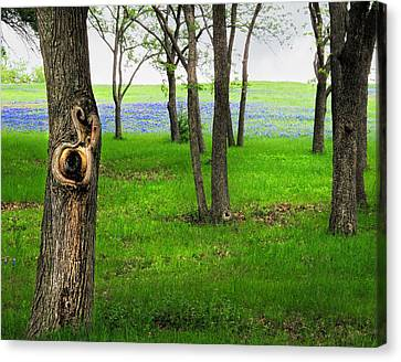The Enchanted Forest Canvas Print by David and Carol Kelly