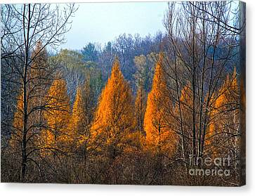 Autum Abstract Canvas Print - The End Of Another Season by Robert Pearson