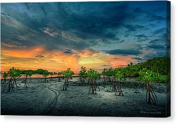 Tree Roots Canvas Print - The Endless Trail by Marvin Spates