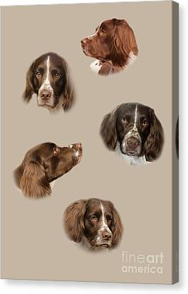 The English Springer Spaniel Canvas Print by Linsey Williams